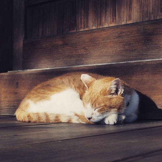 そうだ、猫に会いに行こう!猫と遊んで癒される観光スポット5選!