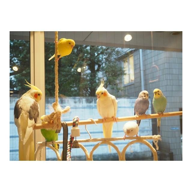 ことりカフェ!?もふもふの小鳥たちに癒される最新カフェが登場!