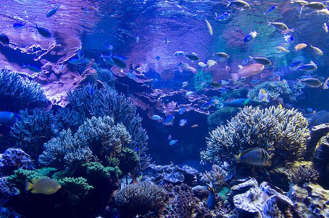 水中の世界へようこそ!日本の水族館おすすめ7選