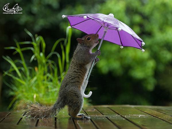 雨が楽しくなる!思わず自慢したくなるアイディア・カサ5選!