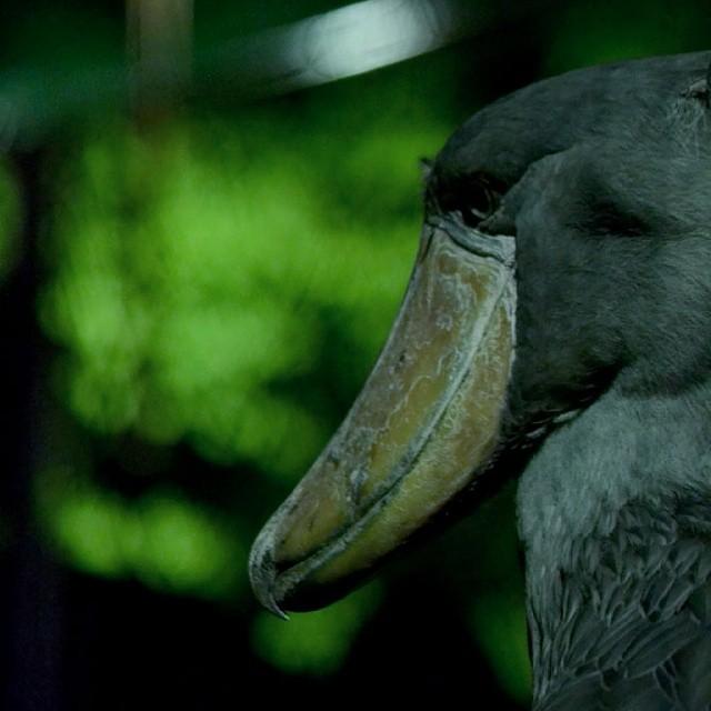 野性の動物にドキドキ!真夏の夜の動物園・ナイトサファリ特集