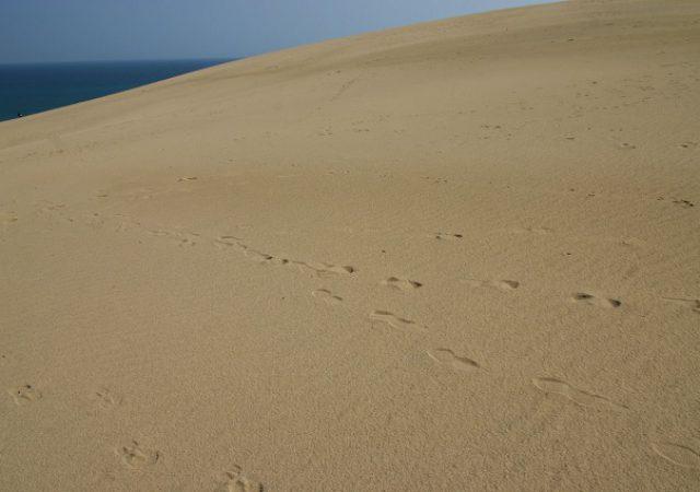 本当に砂丘だけ?鳥取県の魅力が分かる穴場スポット4選