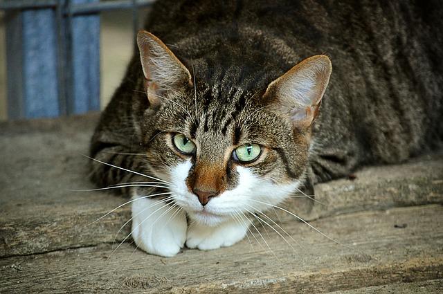 【猫もいっぱい!】青の世界に誘うモロッコ・シャウエンの魅力