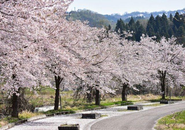 お花見の時期に訪れたい!熊本のおすすめお花見スポット4選