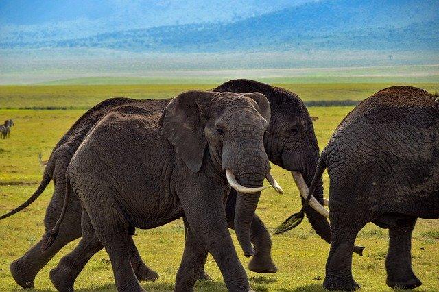 サファリ地区最後の楽園!タンザニア・セレンゲティ国立公園のツアーに参加しよう