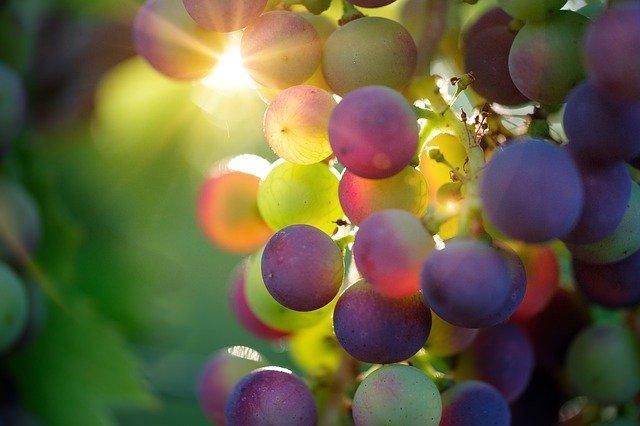 田舎町の美味しいワインを味わおう!マッジーのおすすめワイナリー3選